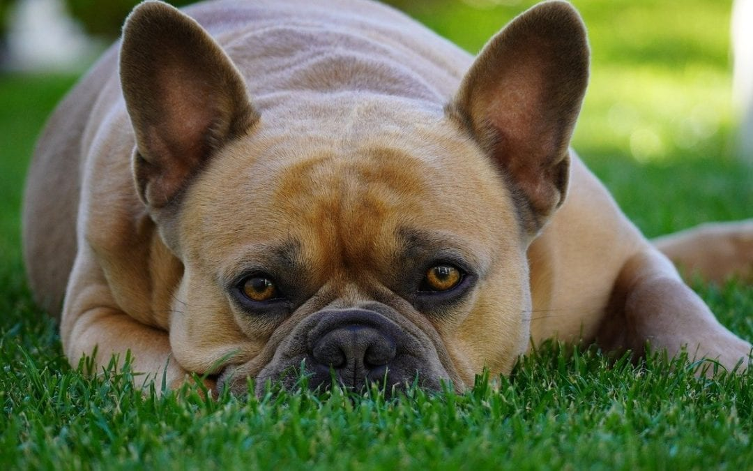 How Your Pet Can Beat the Heat